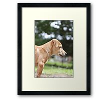 Jack at 12 weeks old Framed Print