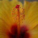 Pollen by BLAMB