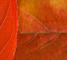 Natural Textures by Rhys Herbert