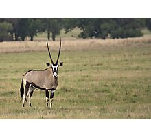 Oryx Photographic Print