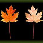 Autumn Leaf by Daniel Sorine
