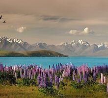Lake Tekapo  by Steven  Sandner