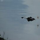 gator swimming with dragonflies by Margaret  Shark