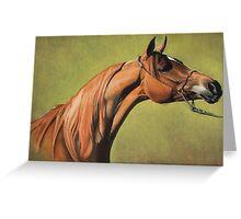 Arabian Horse Portrait Greeting Card