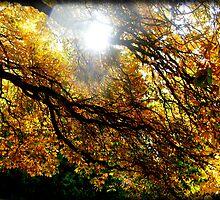 Autumn Leaves by Mari  Wirta