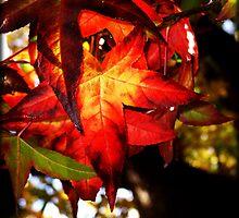 Autumn Leaf by Mari  Wirta