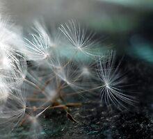 Dandelion Whispers by yolanda