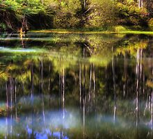Billabong Reflection by Hans Kawitzki