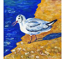 Seagull at the Baltic Sea Photographic Print