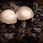 Mushroom Love by Tonye Banks