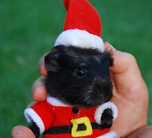 Merry Christmass Mr Guinea Pig by toosweet