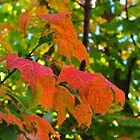 Brilliantly Bold As Autumn is Told by Anthony  Romano