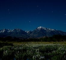 Eastern Sierras and Iris by Moonlight by Nolan Nitschke