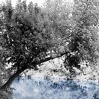 Winter Wonderland by Angelica Aguilar