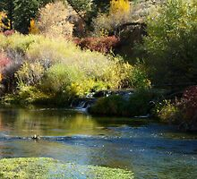 The River Runs Through It by Jan  Tribe