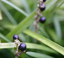 Berries by Benjamin Sloma