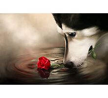 Dog with Rose - Shelter Art Photographic Print