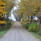 Back Country Road in October by mltrue