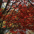 Red Fall Trees by brooke1429