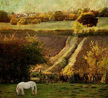 after the rain  by Sonia de Macedo-Stewart