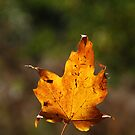Golden Leaf by Vonnie Murfin