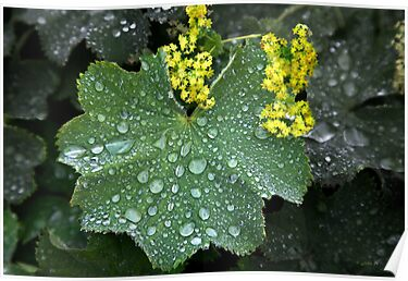 Rainddrops keep falling on my leaf by John44