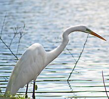White Crane by Peggy Berger