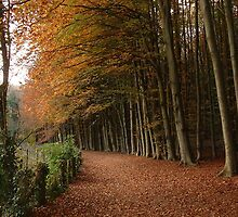 Walking Through The Beeches by MeJude
