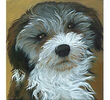 Chico - dog portrait Photographic Print