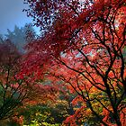 Fall Colors in Portland Japanese Garden by davidgnsx1