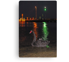 Black Swan At Night  Canvas Print