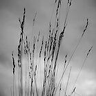 A light breeze by Mitch  McFarlane