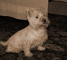 My dog crumb-9 by trainmaniac