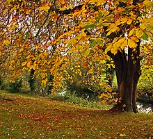 Autumn in Santry Demesne by Martina Fagan
