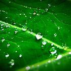 rain drops by Naomi Hayes