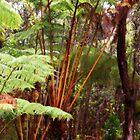 Rainforest, Big Island, Hawaii by Naomi Hayes