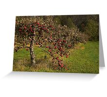 Lone Oaks Apples Greeting Card
