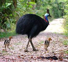Dad and his babies. Licula forest Mission Beach QLD. by Susan Kelly