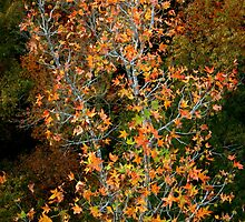 Juxtaposition in Autumn by Lisa G. Putman