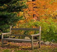 Garden Bench in Autumn by Monica M. Scanlan