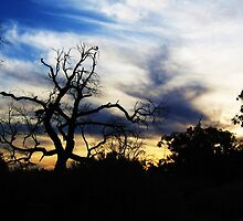 Evening in the bush by Stephanie Stengel | stelonature photography