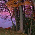 autumn sunset by Carol Knepp