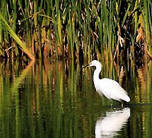 Snowy Egret in Marsh 2 by Wing Tong
