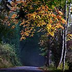 Autumn Road by NancyR