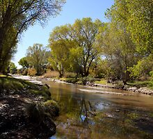 San Pedro River by David F Putnam