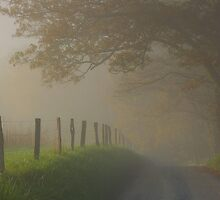 fall in the fog by dc witmer