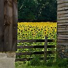 Between Two Barns by DeerPhotoArts