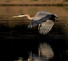 061009 Great Blue Heron by Marvin Collins