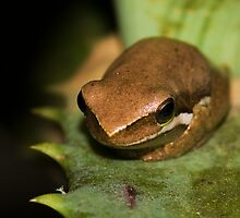 Froglet by Jason Asher