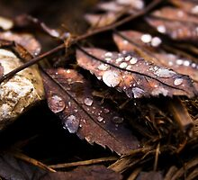 Drops And Leaves by Sylvain Girard